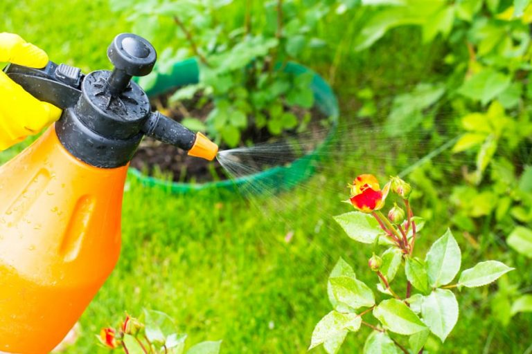 What Is Organic Pest Control